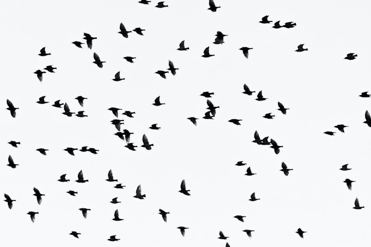صور طيور رائعة خلفيات صور طيور للجوال والكمبيوتر بجودة Hd