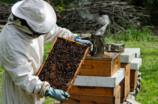 مشروع تربية النحل لإنتاج العسل دراسة جدوى
