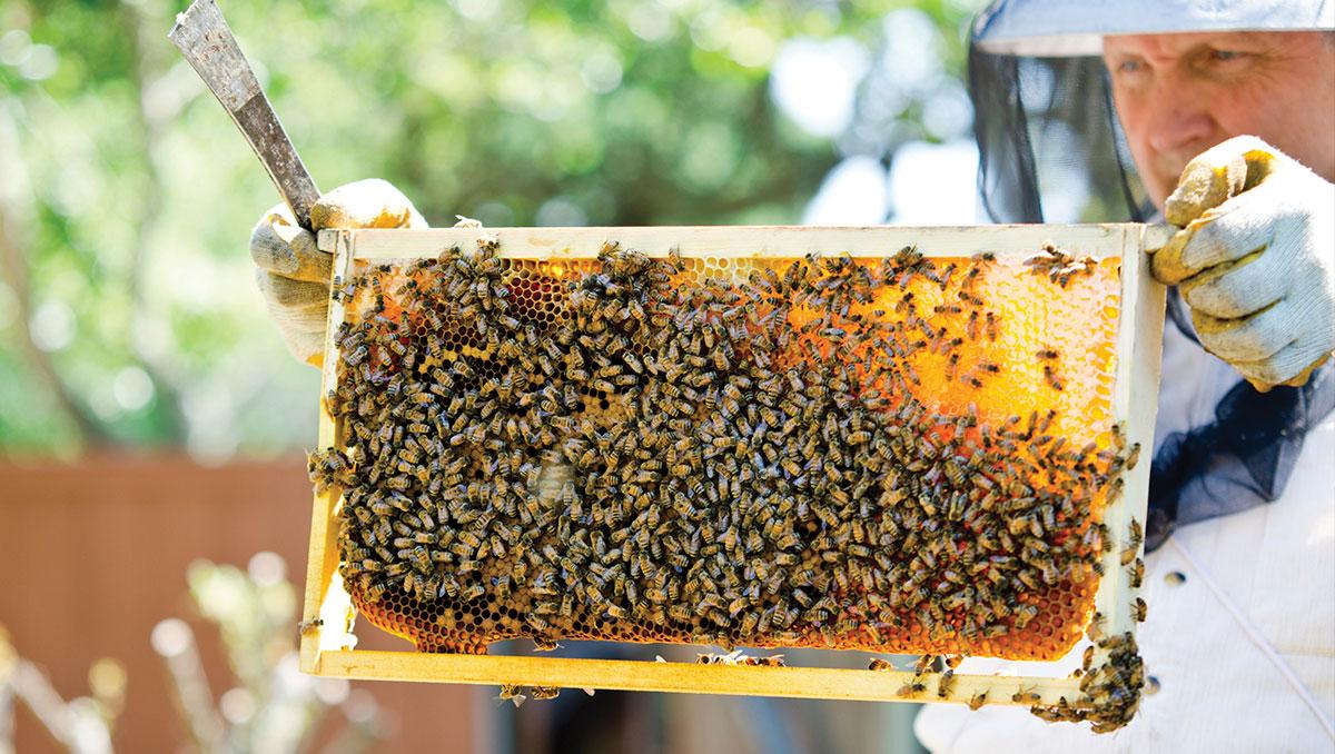 تربية النحل للمبتدئين بالصور pdf