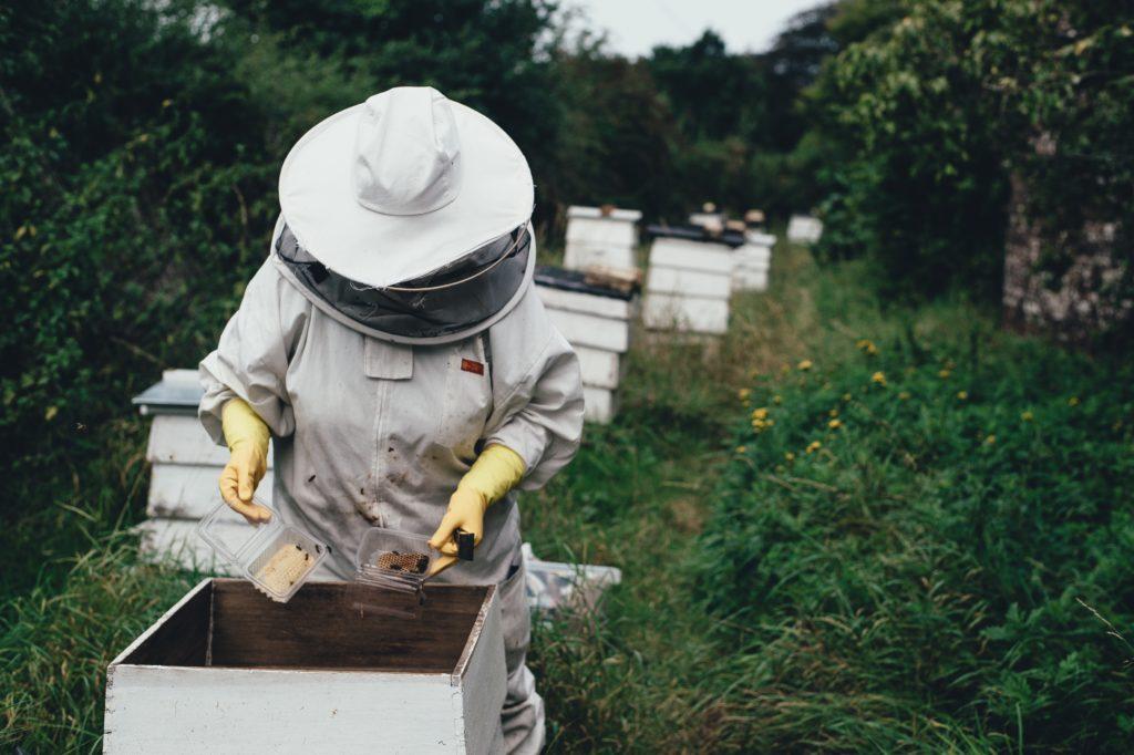مشروع تربية النحل
