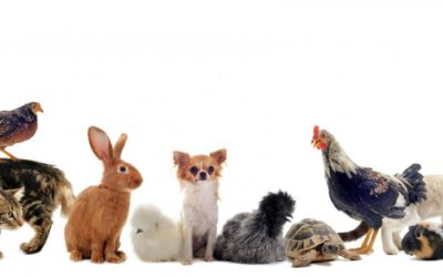 مشروع محل حيوانات أليفة بيع وشراء وفندقة مع دراسة جدوى pdf