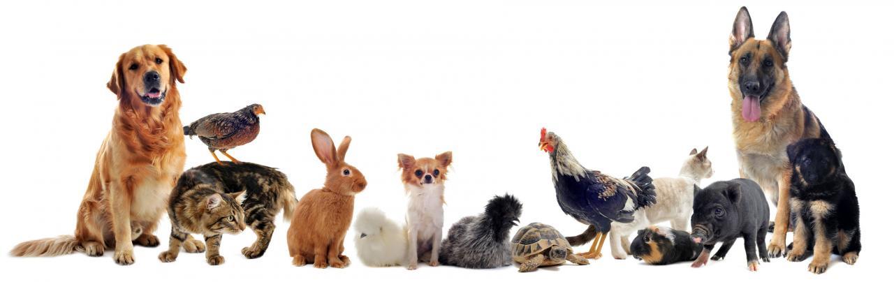 مشروع حيوانات أليفة