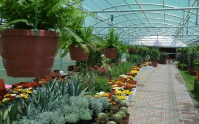 مشروع مشتل نبات زينة مع دراسة جدوى pdf تعرف على مشروع المشتل