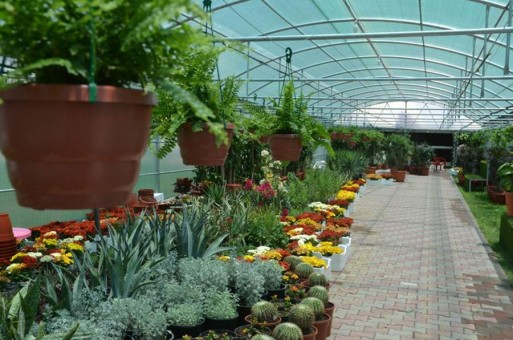 مشروع مشتل نبات زينة