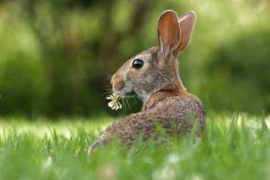 مشروع تربية ارانب