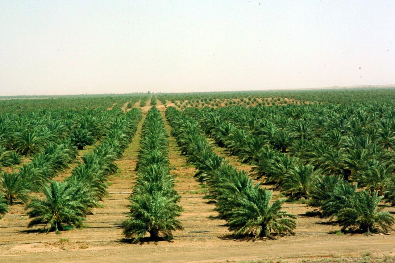 مشروع مزرعة متكامل كيف تستفيد من مزرعتك لأقصى درجة ممكنه