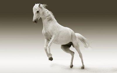 مشروع اسطبل تربية الخيول لغرض الانتاج التجاري نقاط تهمك