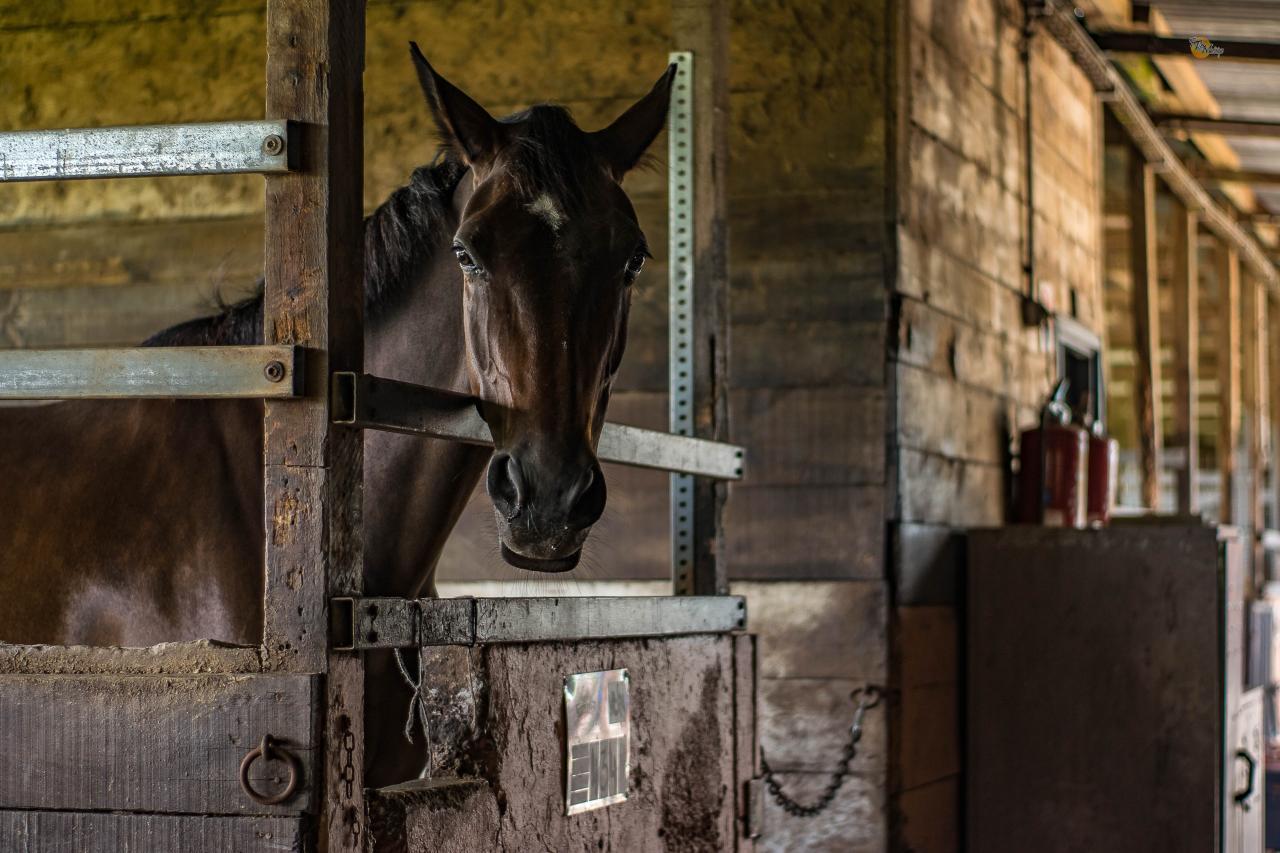 مشروع تربية الخيول لغرض الانتاج التجاري نقاط تهمك