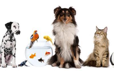 مشروع فندقة حيوانات أليفة كيف ينجح ؟ نصائح وتوجيهات