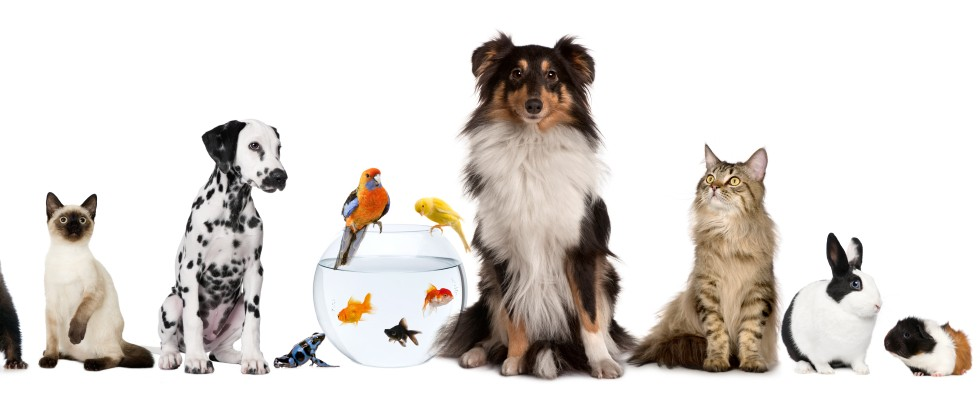مشروع فندقة قطط وطيور وحيوانات أليفه كيف تنجح في المشروع.