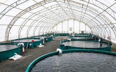 مشروع مزرعة اسماك كيف تنجح في مشروع الاستزراع السمكي في السعودية