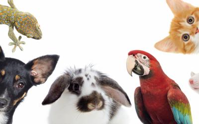 أفكار مشاريع لهواة الحيوانات الأليفة وكيف تحول هوايتك لمشروع