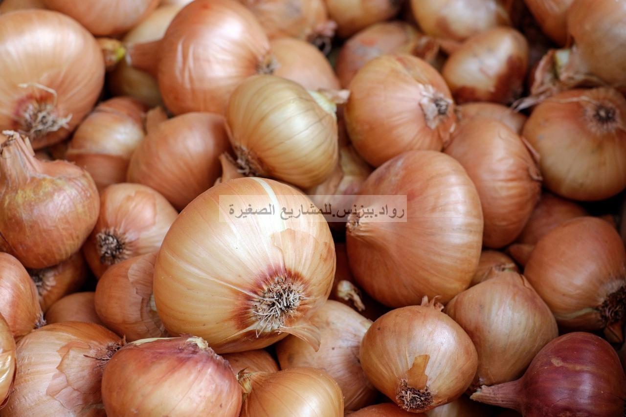 مشروع زراعة البصل في السعودية دليلك للبدء بالمشروع