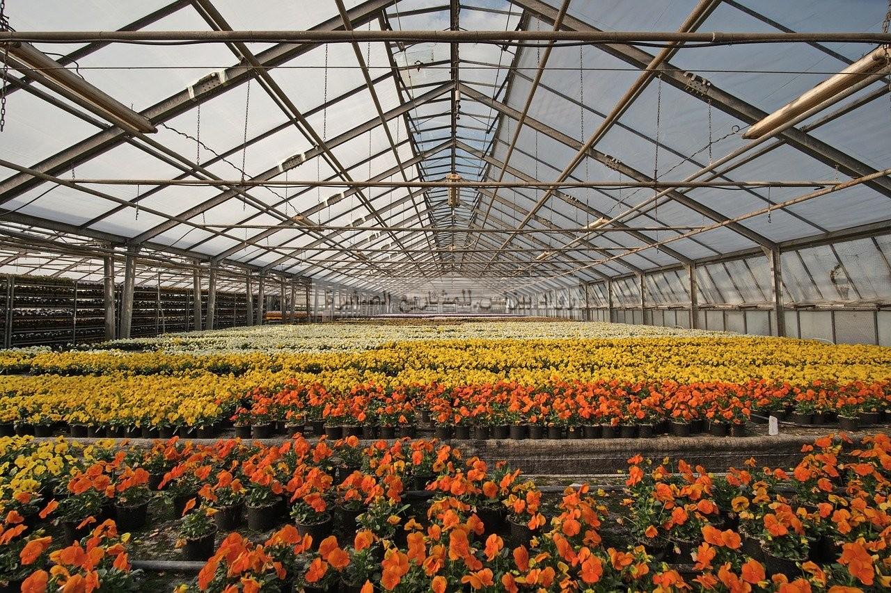 مشروع مشتل ورد كيف تبدأ في زراعة الورد والربح منه