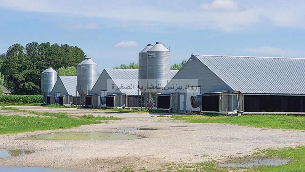 مشروع مزرعة دواجن لاحم مع دراسة جدوى pdf