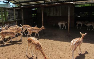 مشروع تربية الغزلان كيف تبدأ مشروع مزرعة لإنتاج الغزال