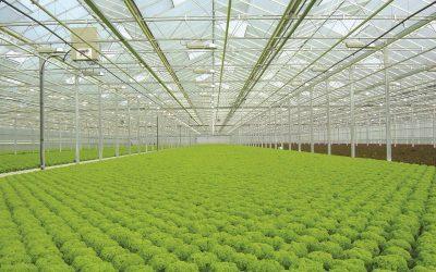 مشروع الزراعة المائية وكل ما تريد معرفته عن الزراعة المائية